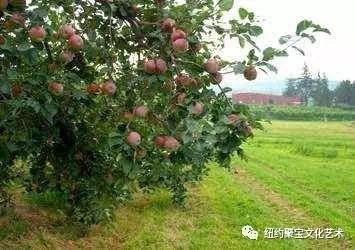 8/27 荘严寺 摘苹果一日游 增设一部Bus